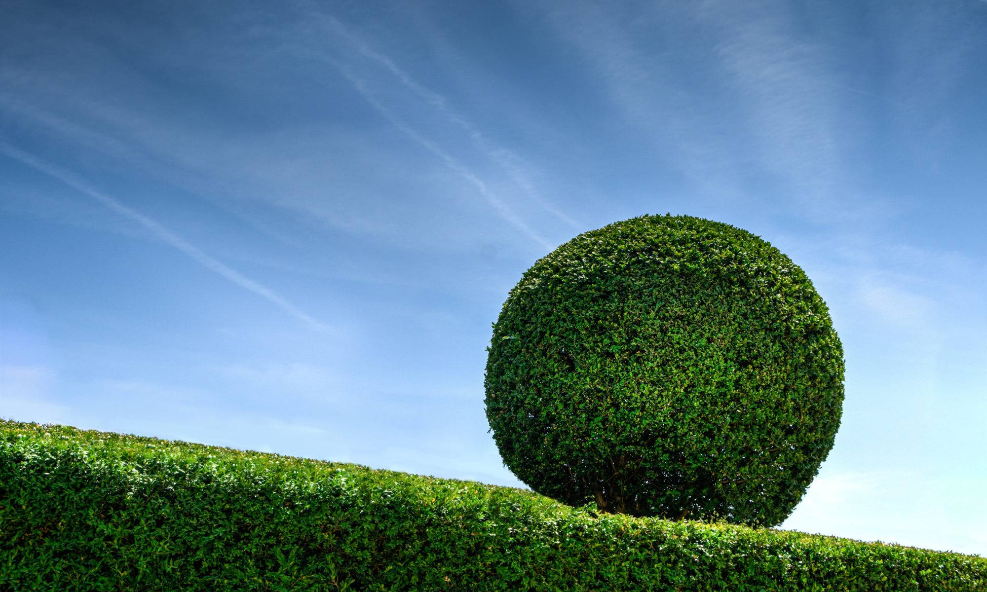 Mitch's Gardening Perth Garden Services - Topiary Hedge Blue Sky Clouds