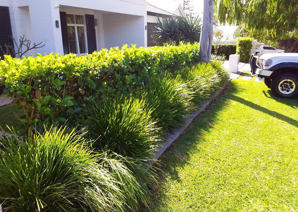 Lawn Care in Nedlands