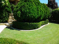 Topiary and Hedging