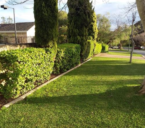 Hedging, Topiary and Lawn care at Dalkeith