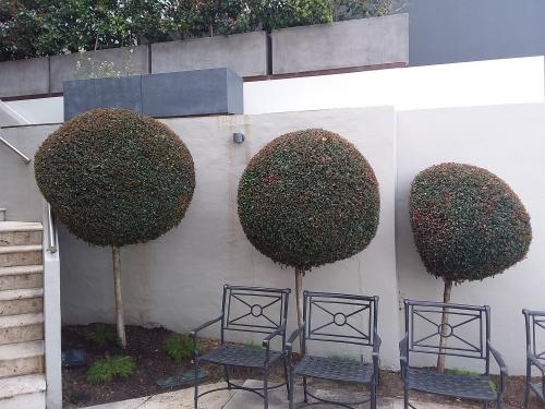 Hedging Topiary at US Consulate