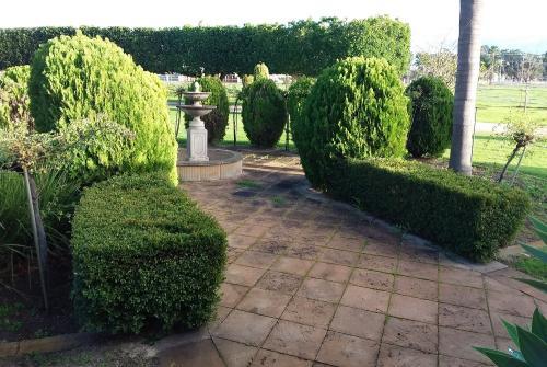 Hedging Topiary in Bullsbrook Gardens