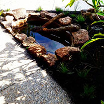 Tropical fish pond at Perth CBD townhouse