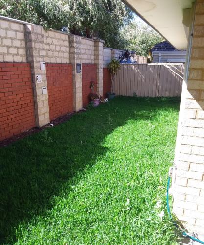 BEFORE - Lawn, Red Mulch and New Plant install in Kingsley