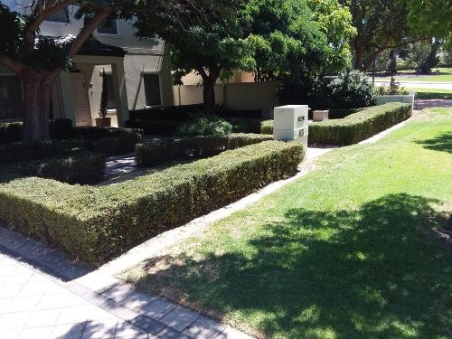 AFTER - Hedging in Menora